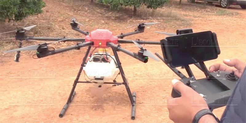 Oriental: Des drones pour booster l'agrumiculture