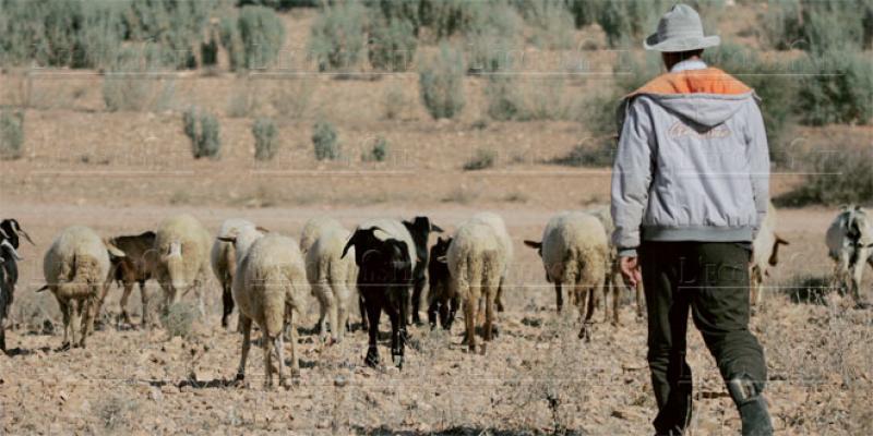 Campagne agricole Urgence d'un plan de sauvetage de l'élevage