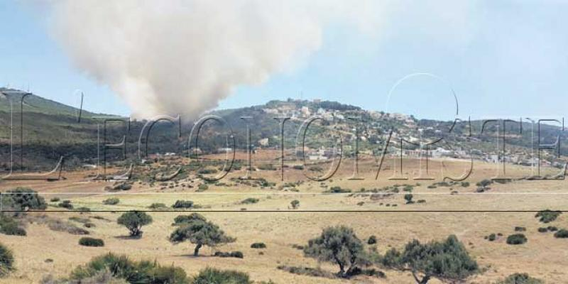 Les forêts de Tanger ravagées par le feu