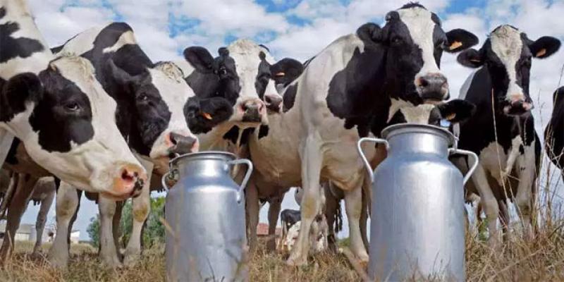 Filière laitière: Des avancées et encore du chemin à faire