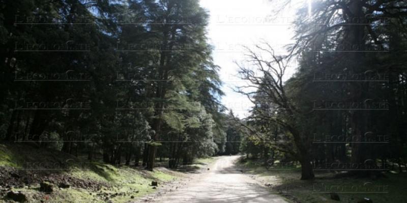 Forêt 2020-2030: La stratégie se met en place