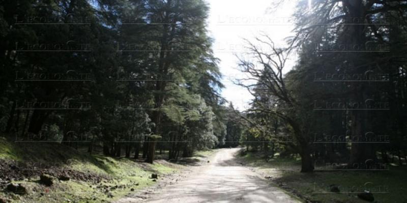 Eaux et forêts: «Régler les problèmes de l'Etat au sein de l'Etat»