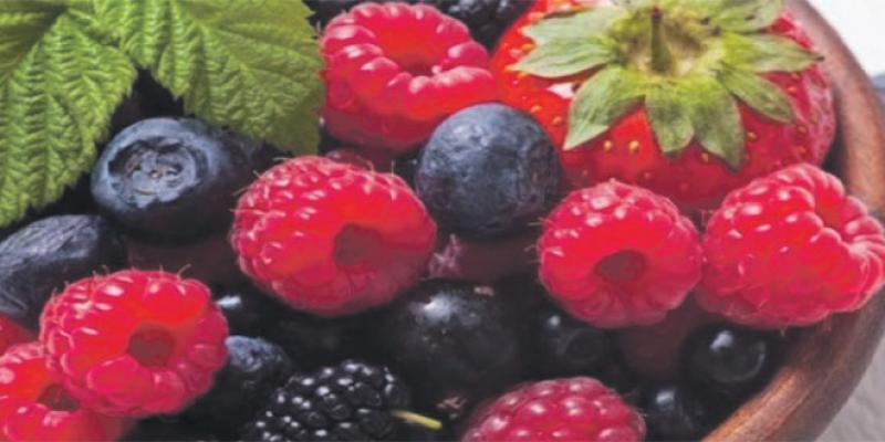 Fruits rouges: La logistique de la filière attire les IDE