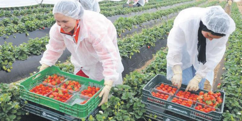 Fruits rouges: 200 ouvrières agricoles accompagnées