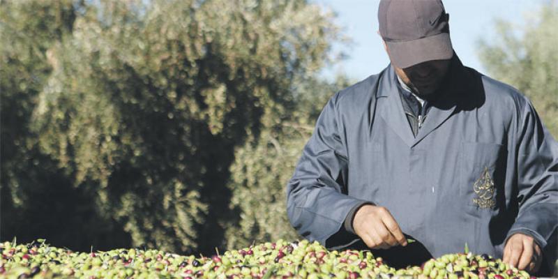 Huile d'olive: Le domaine Noor Fès réinvente le packaging