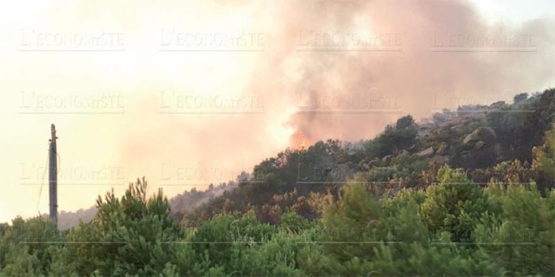 Les incendies de forêt de retour