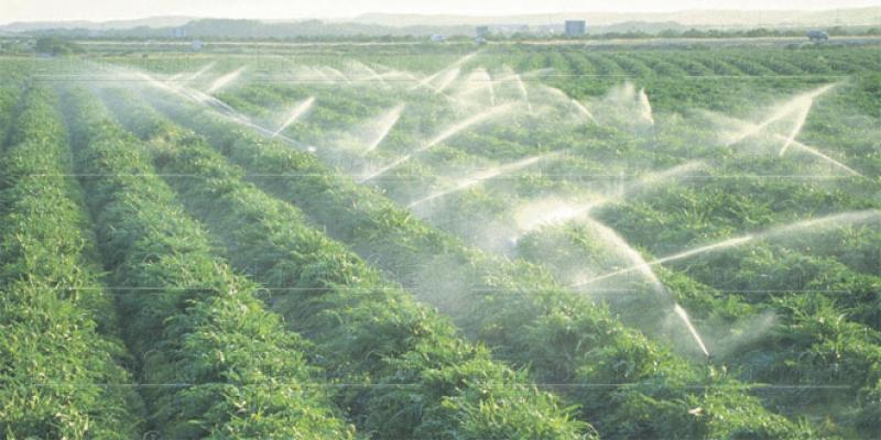 Agriculture: Les détails du programme d'irrigation économe