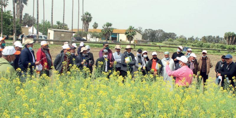 Meknès/Agriculture: L'INRA joue la carte de la sensibilisation