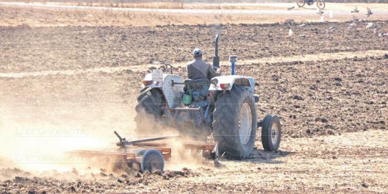 Campagne agricole: En attendant la bonne pluie