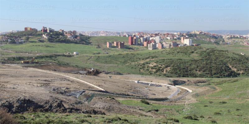 Nord: 800 ha d'oliviers à planter en 2021
