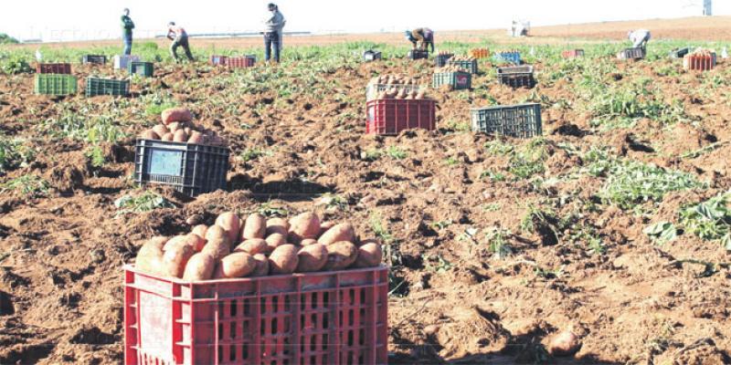 Modèle de développement agricole: Le pari continental de l'OCP