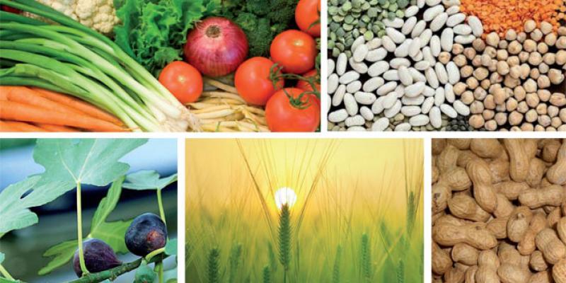 Agriculture: L'OCP renforce son soutien de proximité