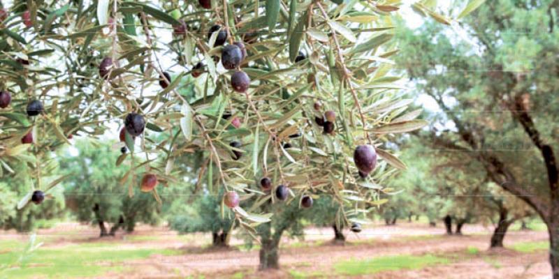 Petite agriculture: L'appli mobile de l'OCP cartonne à Marrakech