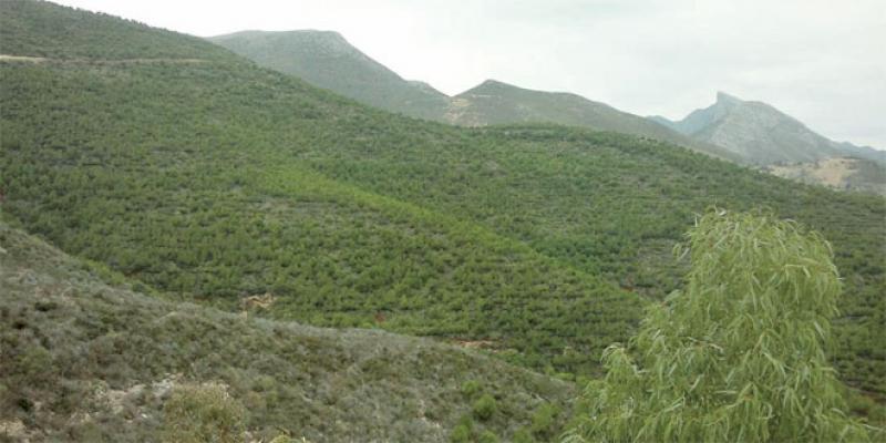 Oriental: 800 millions de DH pour sauver la forêt