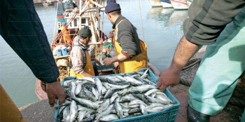 Pêche côtière et artisanale: Recul des débarquements au 1er semestre