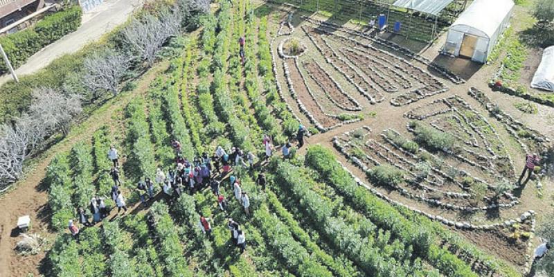Haut Atlas: De la permaculture pour conserver la biodiversité