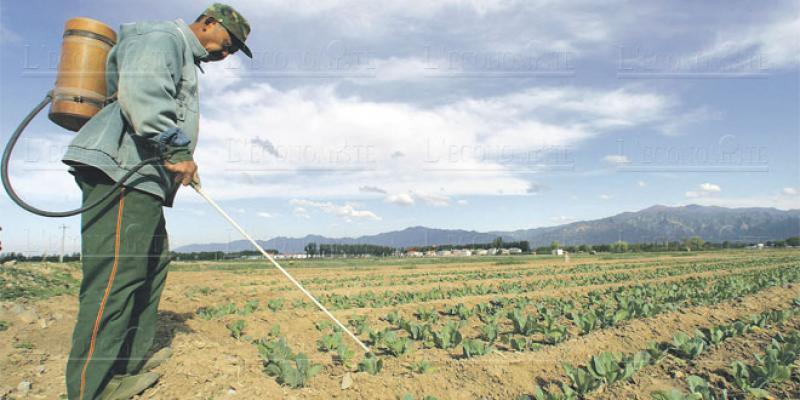 Pesticides: Le Maroc veut durcir le contrôle