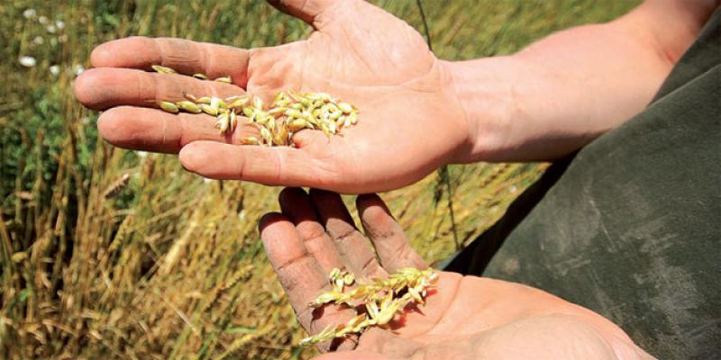 Petite agriculture: Un secteur très vulnérable au changement du climat