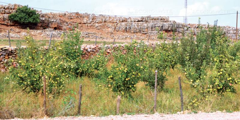Petits agriculteurs: L'OCP veut restructurer la distribution