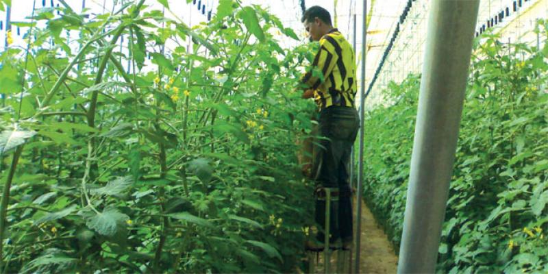 Phytosanitaires: L'informel règne sur au moins 20% du marchés