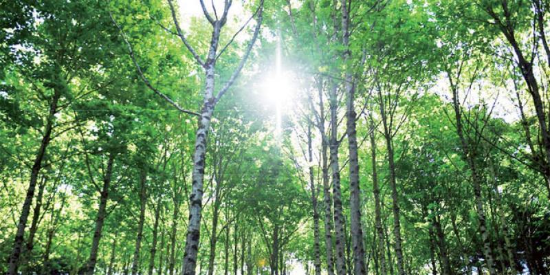 Plan forestier: 600.000 ha à boiser sur une décennie