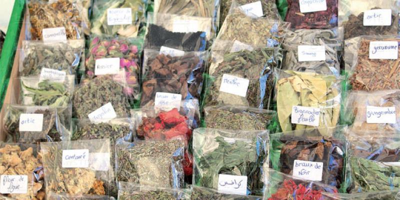 Marrakech/plantes aromatiques & médicinales Le marché s'organise