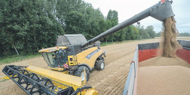 Géographie de la production céréalière: Le satisfecit de la FAO