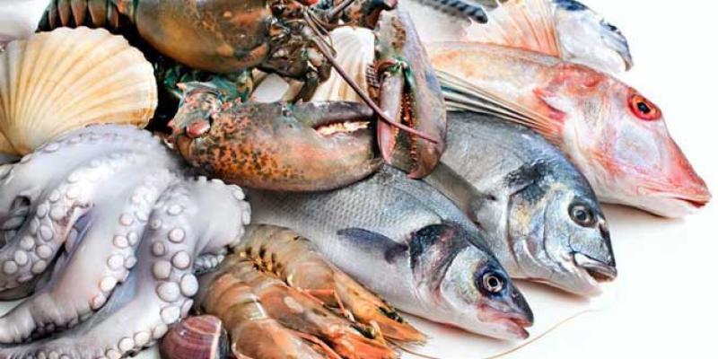 Produits halieutiques: Le Maroc à la peine sur les marchés du Golfe