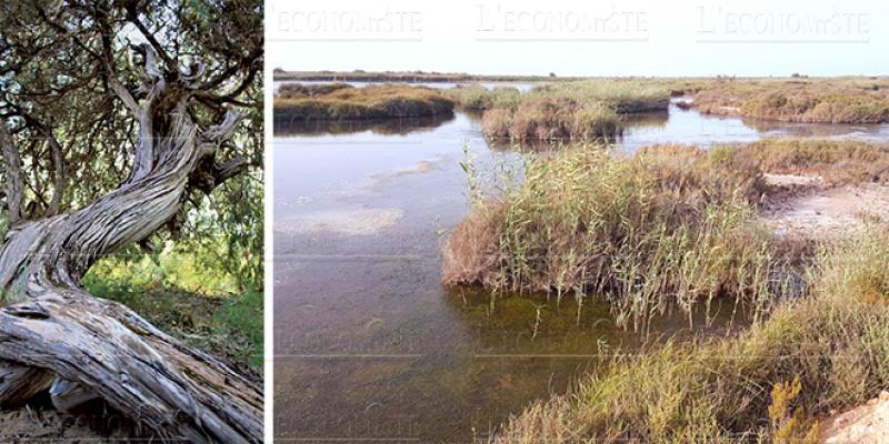 Saïdia: Protéger l'embouchure de la Moulouya, l'autre défi