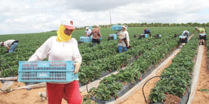 Saisonnières dans les champs de Huelva: L'Anapec lance les préparatifs pour la saison 2020
