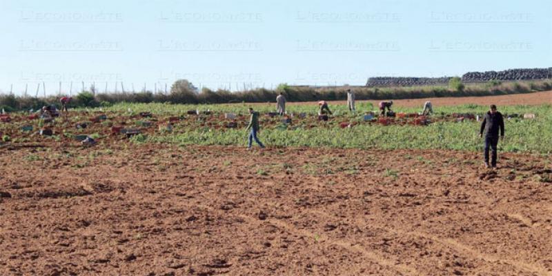 Terres agricoles: Une petite brèche dans la loi