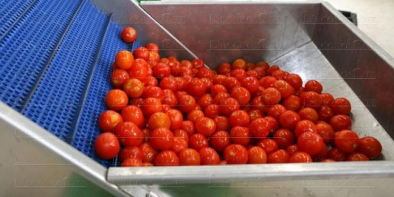 La tomate marocaine prisée en Espagne