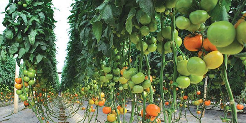 Souss-Massa: 32 milliards de DH pour le développement de l'agriculture