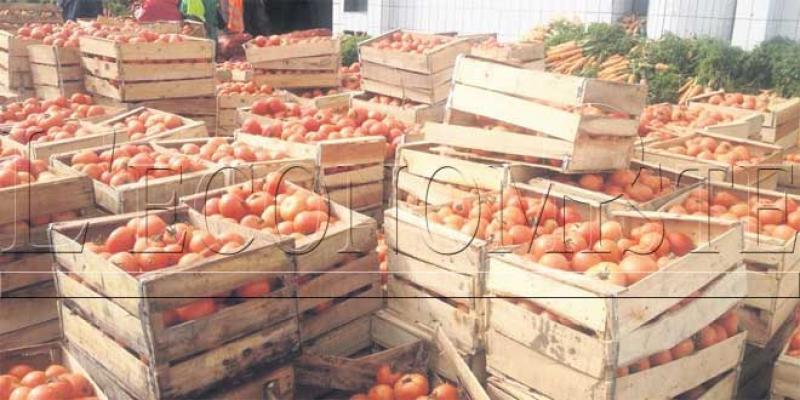 Tomates/Tuta Absoluta Il faut sauver les prochaines campagnes