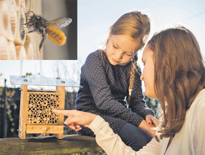 abeilles_sauvages_a_la_maison.jpg