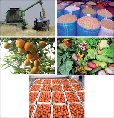 agriculture-063.jpg