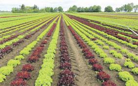 agriculture-074.jpg
