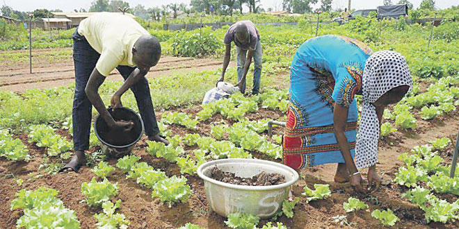 agriculture-afrique-007.jpg