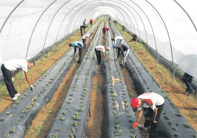 agriculture-bio-016.jpg