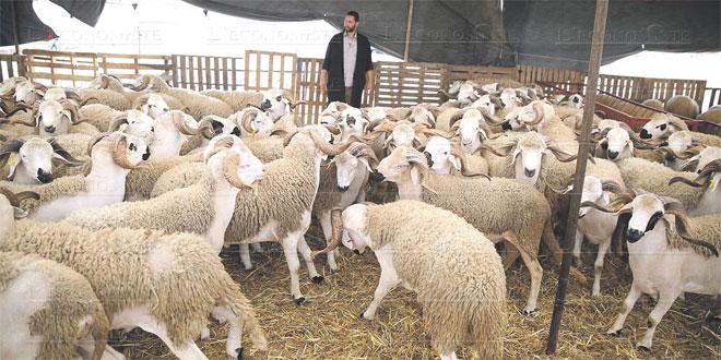 aid-al-adha-moutons-070.jpg