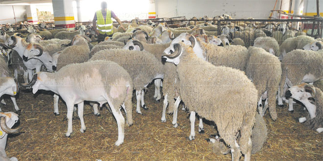 aid-moutons-081.jpg