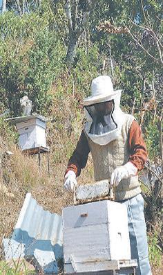 apiculture_039.jpg