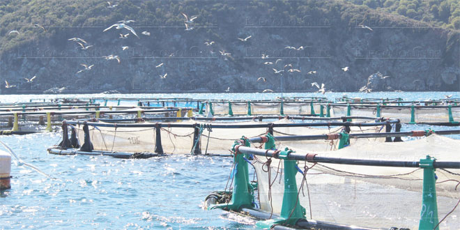 aquaculture-055.jpg