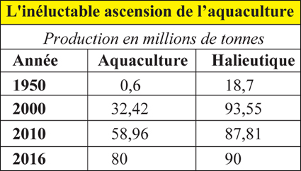 aquaculture_hlietique_015.jpg