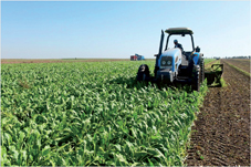 bettrave_agricultures_008.jpg
