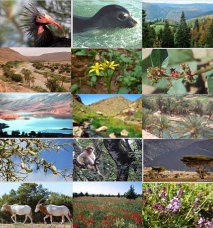 biodiversite_024.jpg