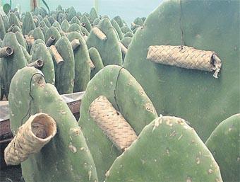 cactus_050.jpg