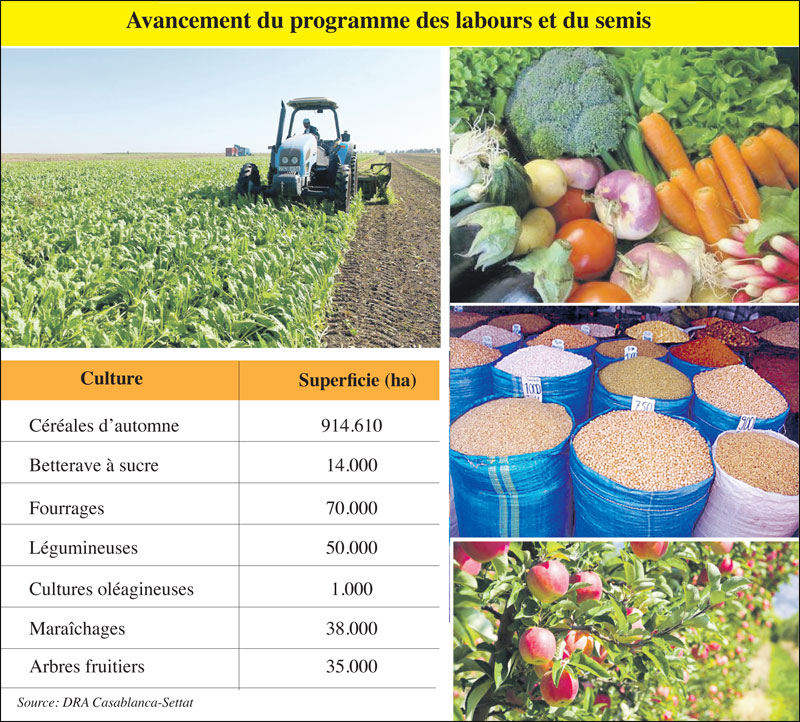 casablanca-settat-agriculture-091.jpg