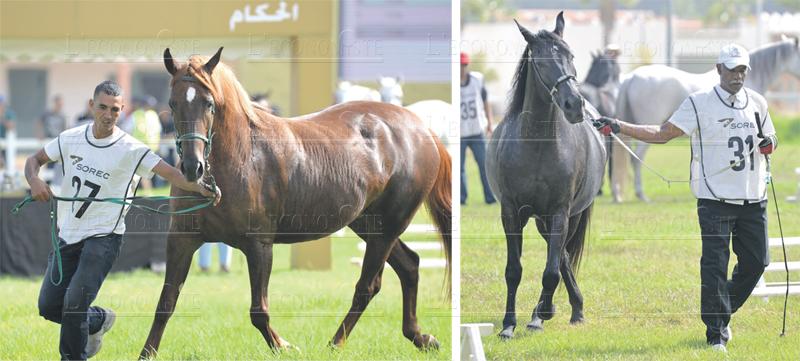 cheval_arabe-barbe_056.jpg