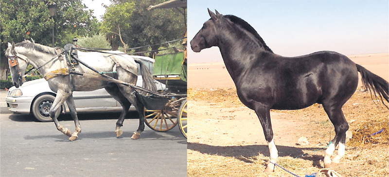 chevaux_007.jpg
